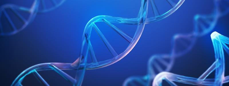 O que é e qual é a função do material genético?
