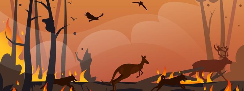 As consequências das queimadas e como elas afetam o meio ambiente