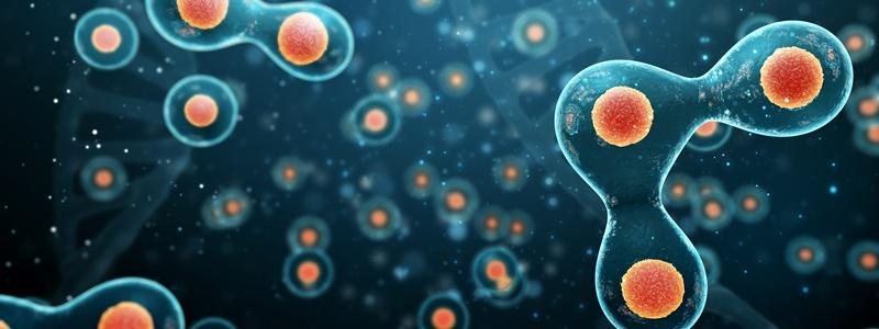 A diferença entre mitose e meiose