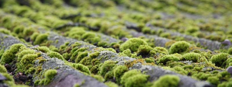 Entenda a diferença entre briófitas e pteridófitas