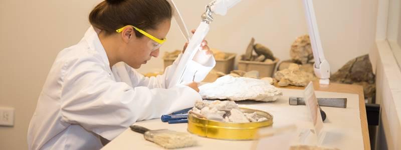 O que é a Paleontologia?