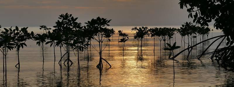 O que são manguezais e onde são encontrados?