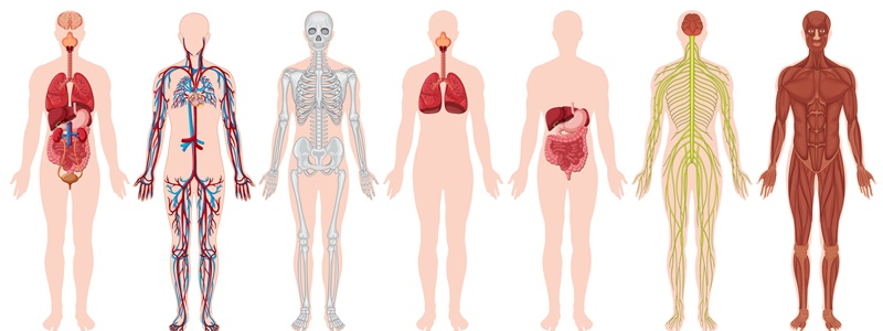 Traços anatômicos, fisiológicos e morfológicos